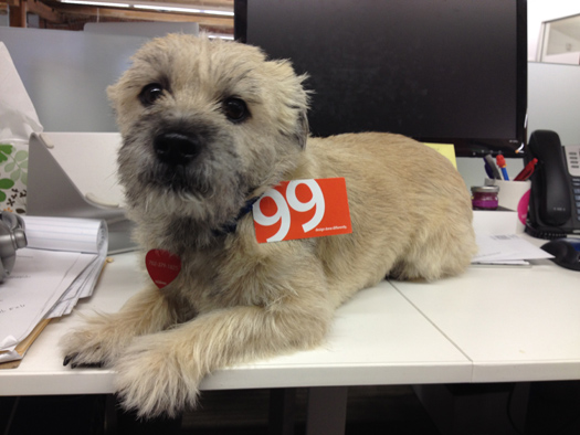 99 design has a dog friendly culture