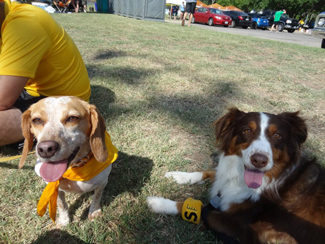 sparefoot workers love their dogs